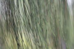 Зеленый цвет стены выходит предпосылка Стоковое Фото