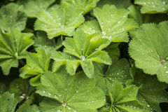 Зеленый цвет с малыми падениями воды Стоковые Изображения