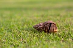 Зеленый цвет травы краба Стоковое фото RF