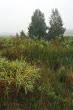 зеленый цвет травы начала осени выходит желтый цвет стоковые фото