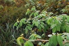 зеленый цвет травы начала осени выходит желтый цвет стоковое изображение