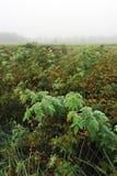 зеленый цвет травы начала осени выходит желтый цвет стоковая фотография rf