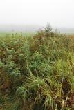 зеленый цвет травы начала осени выходит желтый цвет стоковое изображение rf