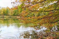 зеленый цвет травы осени даже выходит померанцовая тихая погода взгляда Стоковое фото RF