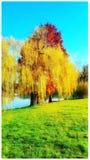зеленый цвет травы осени понижаясь выходит красный цвет утра Стоковые Фото