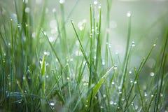 зеленый цвет травы падений росы свежий Стоковое фото RF