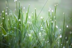 зеленый цвет травы падений росы свежий Стоковая Фотография RF
