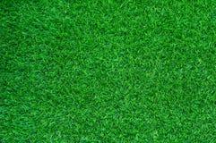 зеленый цвет травы поля предпосылки Стоковое Изображение