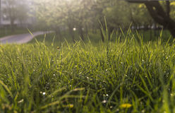 зеленый цвет травы предпосылки свежий текстура травы естественная Стоковое Изображение RF