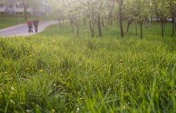 зеленый цвет травы предпосылки свежий текстура травы естественная Стоковое Фото