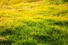 зеленый цвет травы предпосылки свежий Стоковая Фотография