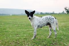 зеленый цвет травы собаки Стоковые Изображения RF