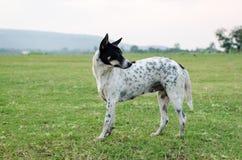 зеленый цвет травы собаки Стоковые Фото
