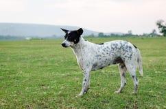 зеленый цвет травы собаки Стоковое Изображение RF