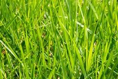 зеленый цвет травы фокуса крупного плана селективный Стоковое Фото