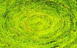зеленый цвет травы dof предпосылки отмелый Стоковая Фотография RF