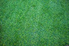 зеленый цвет травы dof предпосылки отмелый Стоковые Изображения RF