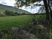 зеленый цвет луга Стоковая Фотография RF