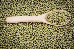 зеленый цвет фасолей свежий Стоковое фото RF