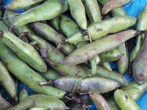 зеленый цвет фасолей свежий Стоковое Фото