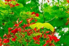 зеленый цвет цветка выходит красный цвет Стоковое фото RF