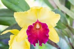 Зеленый цвет цветка орхидеи Стоковое Изображение RF