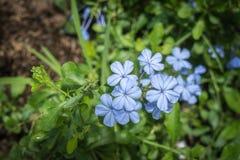 зеленый цвет цветка предпосылки голубой Стоковое Фото