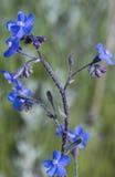 зеленый цвет цветка предпосылки голубой Стоковое Изображение RF