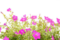 зеленый цвет цветков выходит розовая безшовная плитка Стоковое Изображение