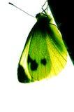 Зеленый цвет batterfly стоковая фотография rf