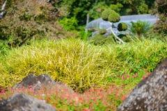 зеленый цвет comosum chlorophytum выходит спайдер завода Завод паука Стоковые Фотографии RF