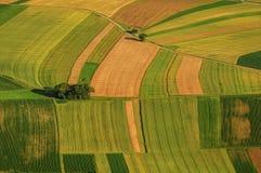 Зеленый цвет fields вид с воздуха перед хлебоуборкой Стоковое Изображение RF