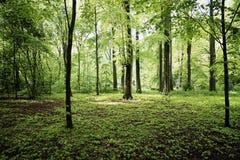 Зеленый цвет forrest в лете Европе Стоковые Фото