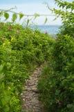Зеленый цвет, Fuschia голубой коричневый цвет Стоковые Изображения