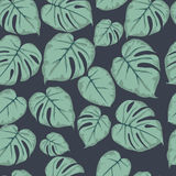 Зеленый цвет Monstera выходит безшовная картина на темную предпосылку Стоковые Изображения RF