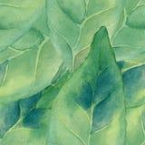 Зеленый цвет Watercolour выходит безшовная картина Стоковые Изображения RF