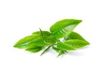 зеленый чай листьев Стоковая Фотография