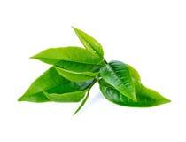 зеленый чай листьев Стоковое Изображение