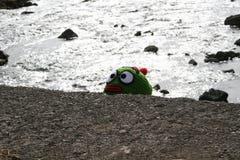 Зеленый эльф стоковое фото
