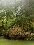 Зеленый Стоковое Изображение