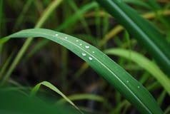 Зеленый Стоковое Фото