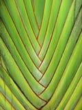 Зеленый Стоковые Изображения