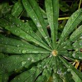 Зеленый Стоковые Фото