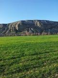 Зеленый Стоковая Фотография