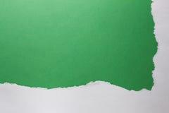Зеленый Стоковое Изображение RF