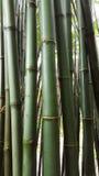 Зеленый bamboo хобот стоковые изображения
