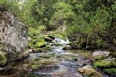 Зеленый flume стоковая фотография