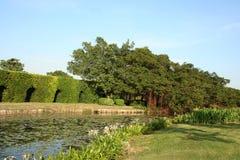 Зеленый glade ландшафта Стоковая Фотография RF