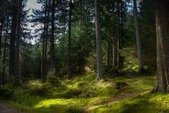 Зеленый glade леса Стоковое Изображение RF