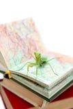 Зеленый mantis на старой книге, конец вверх, селективный фокус Mantodea Стоковая Фотография RF